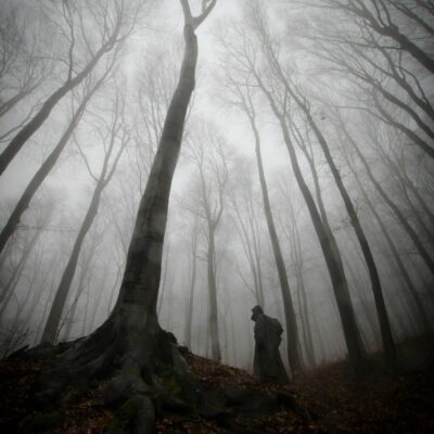 Dark and mysterious creepy woods