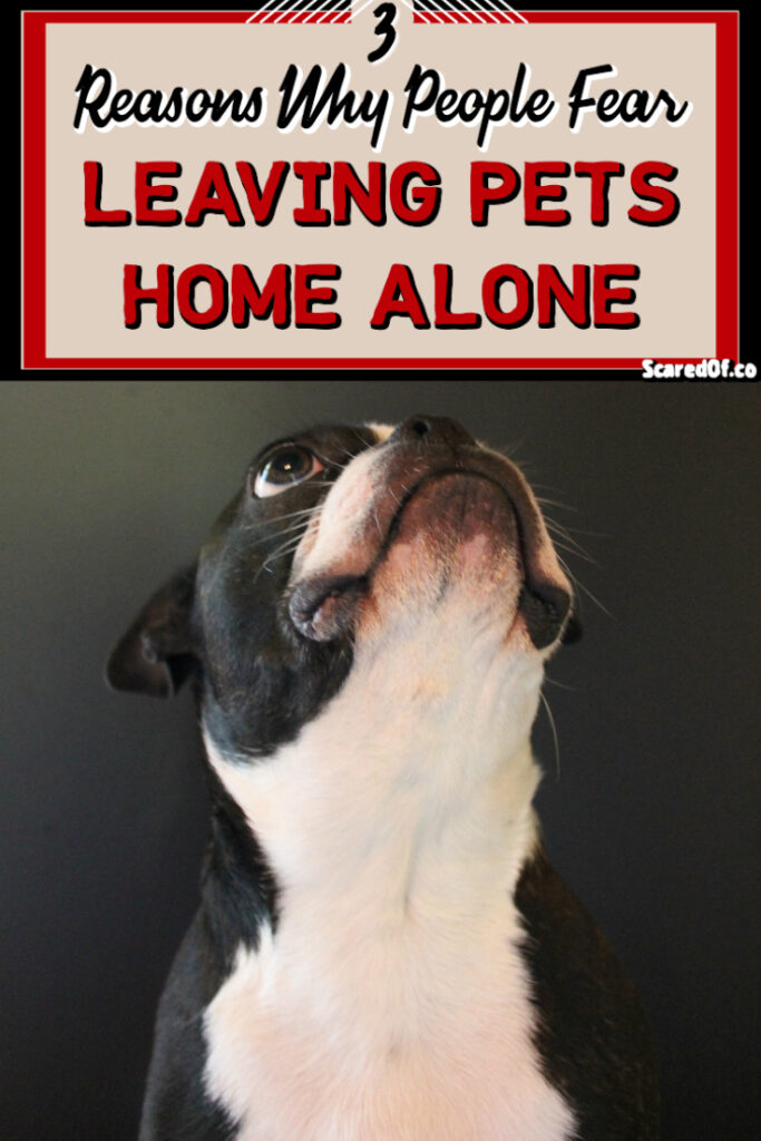 3 Main Reasons for Fear of Leaving Pets Home Alone
