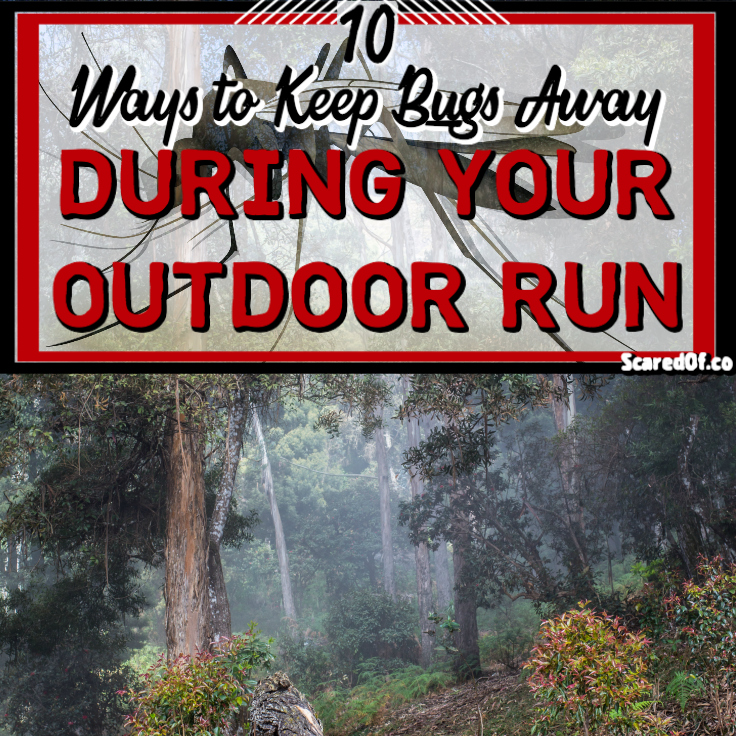 10 ways to keep bugs away during an outdoor run scared of - Keep mites away backyard hiking ...