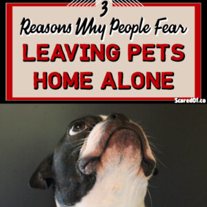 3 Reasons for Fear of Leaving Pets Home Alone