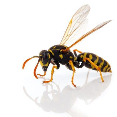 How to Keep Wasps Away at a BBQ